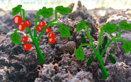 zu Hause Gemüse pflanzen