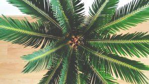 Hauspflanze Perspektive oben