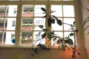 pflanze Büro